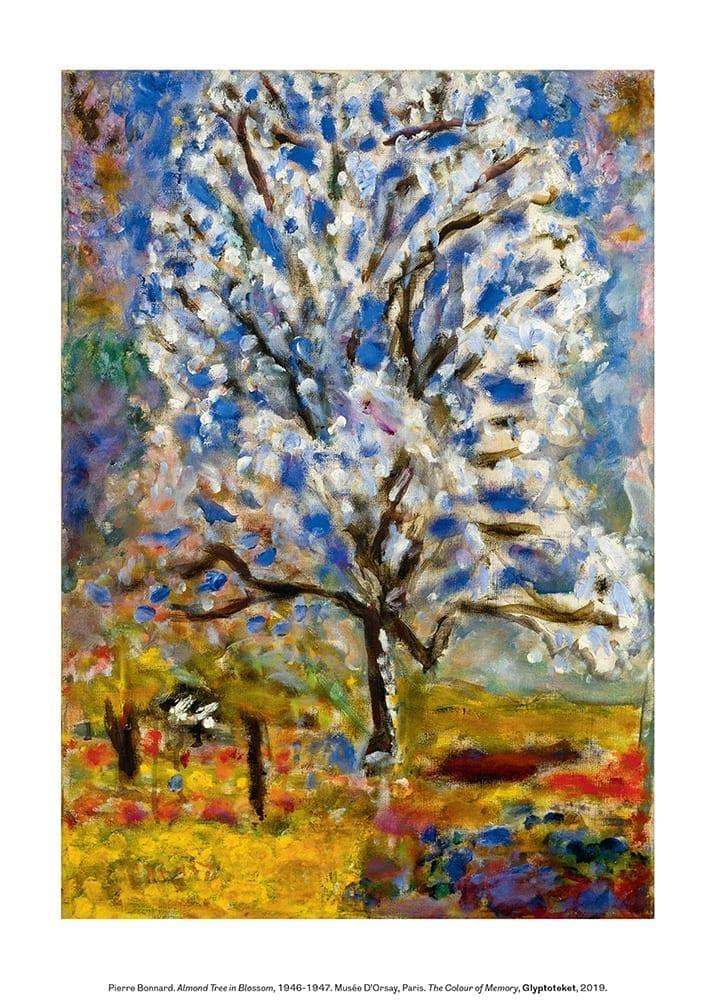 Almond Tree in Blossom. Pierre Bonnard Print
